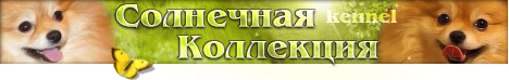 Питомник шпицев